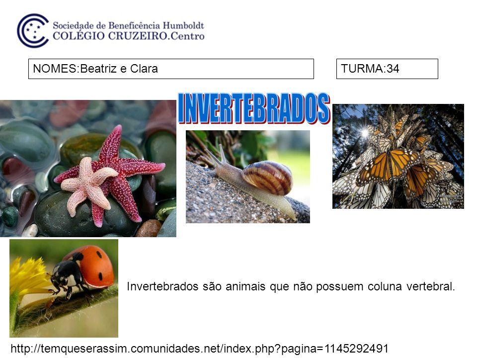 NOMES:Beatriz e ClaraTURMA:34 Invertebrados são animais que não possuem coluna vertebral. http://temqueserassim.comunidades.net/index.php?pagina=11452