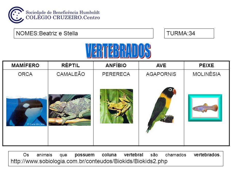 MAMÍFERORÉPTILANFÍBIOAVEPEIXE ORCACAMALEÃOPERERECAAGAPORNISMOLINÉSIA NOMES:Beatriz e StellaTURMA:34 Os animais que possuem coluna vertebral são chamad