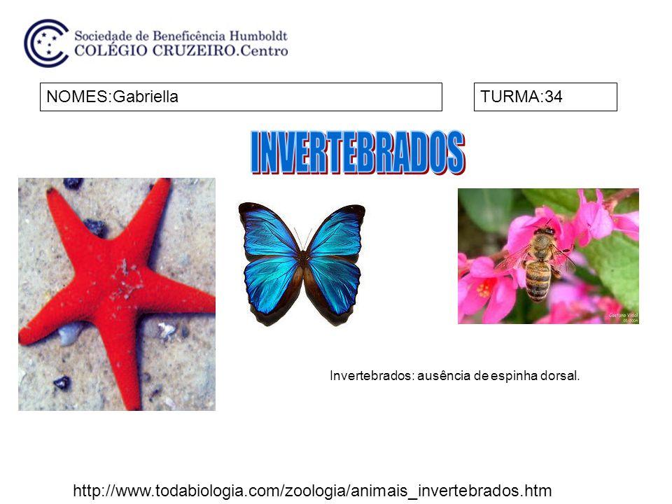 NOMES:GabriellaTURMA:34 Invertebrados: ausência de espinha dorsal. http://www.todabiologia.com/zoologia/animais_invertebrados.htm