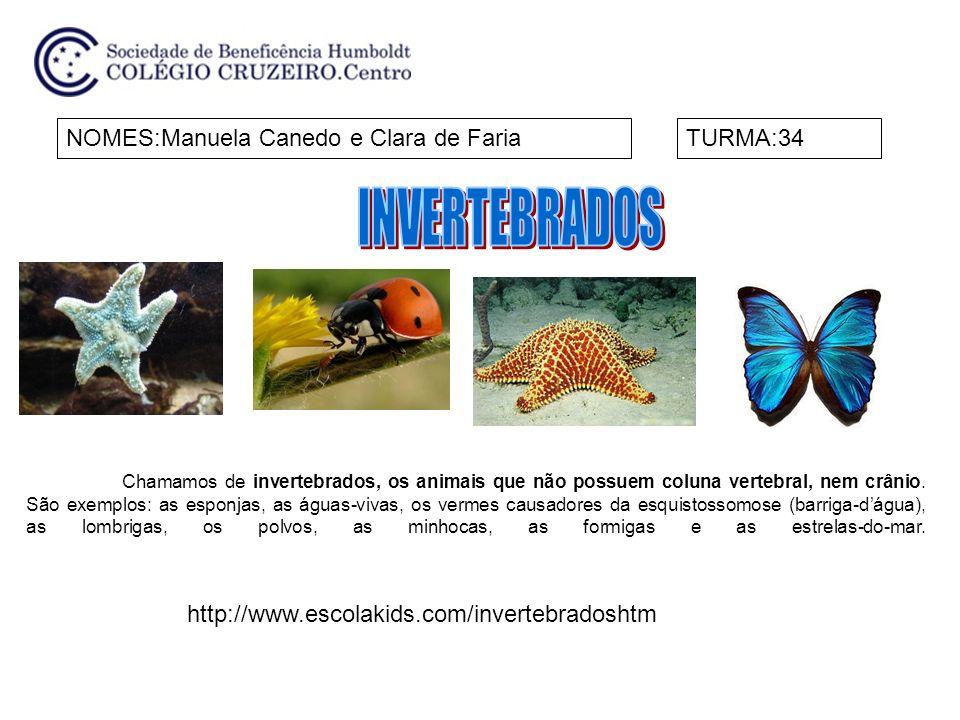 NOMES:Manuela Canedo e Clara de FariaTURMA:34 http://www.escolakids.com/invertebradoshtm Chamamos de invertebrados, os animais que não possuem coluna