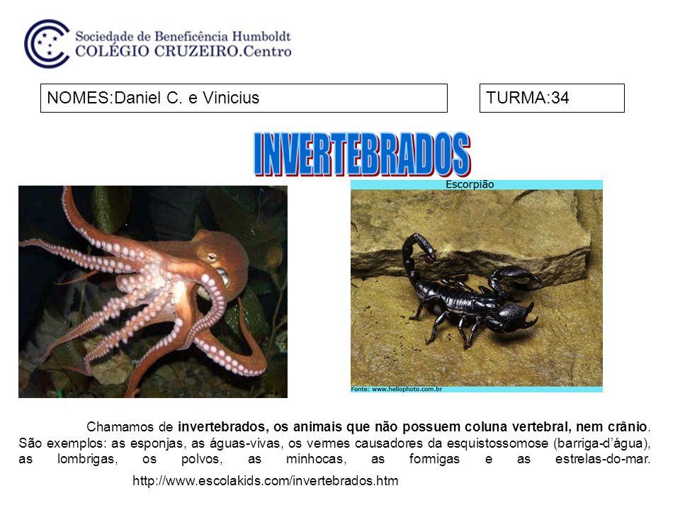 NOMES:Daniel C. e ViniciusTURMA:34 http://www.escolakids.com/invertebrados.htm Chamamos de invertebrados, os animais que não possuem coluna vertebral,
