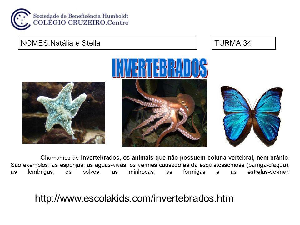 NOMES:Natália e StellaTURMA:34 http://www.escolakids.com/invertebrados.htm Chamamos de invertebrados, os animais que não possuem coluna vertebral, nem