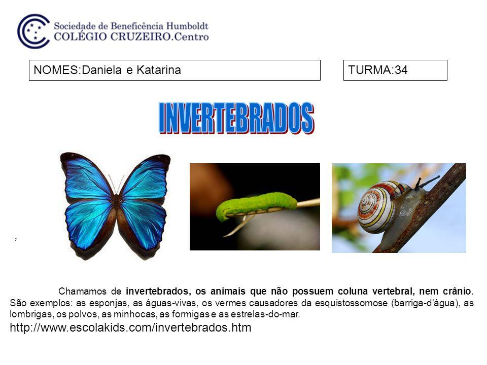 NOMES:Daniela e KatarinaTURMA:34, Chamamos de invertebrados, os animais que não possuem coluna vertebral, nem crânio. São exemplos: as esponjas, as ág