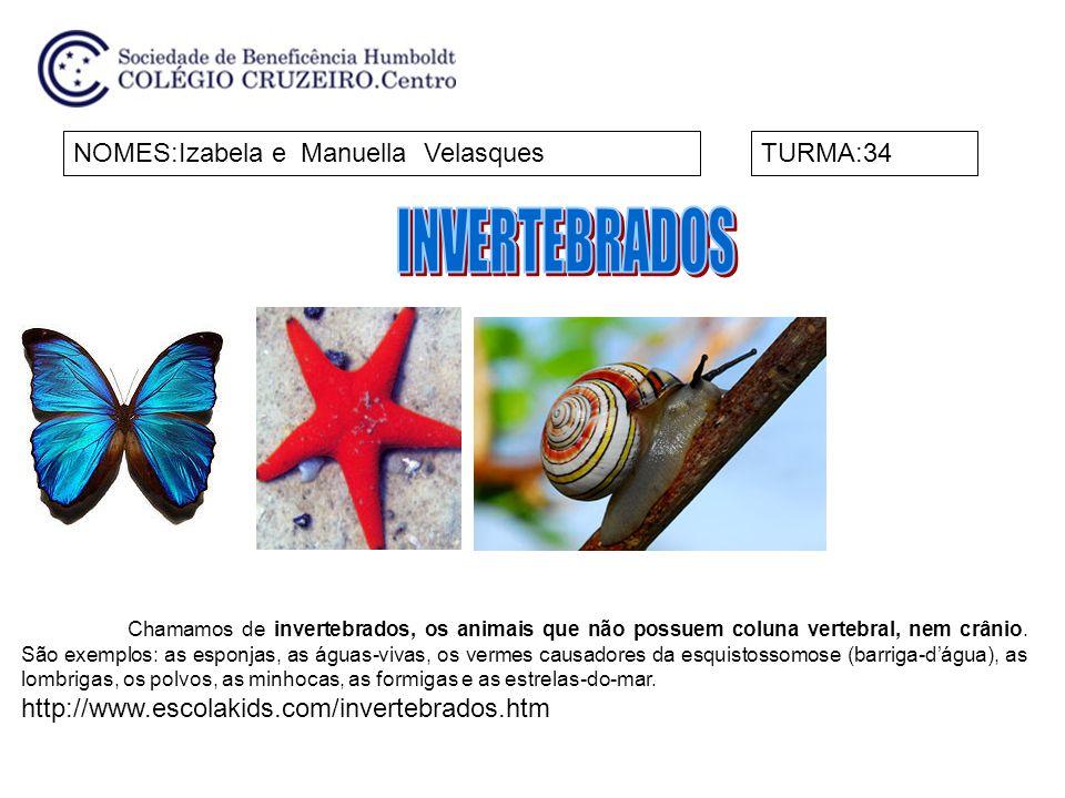 NOMES:Izabela e Manuella VelasquesTURMA:34 Chamamos de invertebrados, os animais que não possuem coluna vertebral, nem crânio. São exemplos: as esponj