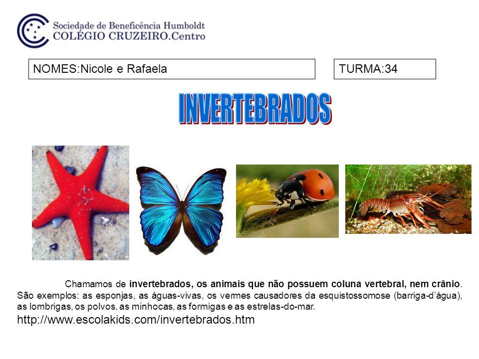 NOMES:Nicole e RafaelaTURMA:34 Chamamos de invertebrados, os animais que não possuem coluna vertebral, nem crânio. São exemplos: as esponjas, as águas
