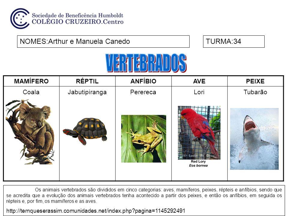 MAMÍFERORÉPTILANFÍBIOAVEPEIXE CoalaJabutipirangaPererecaLoriTubarão NOMES:Arthur e Manuela CanedoTURMA:34 Os animais vertebrados são divididos em cinc