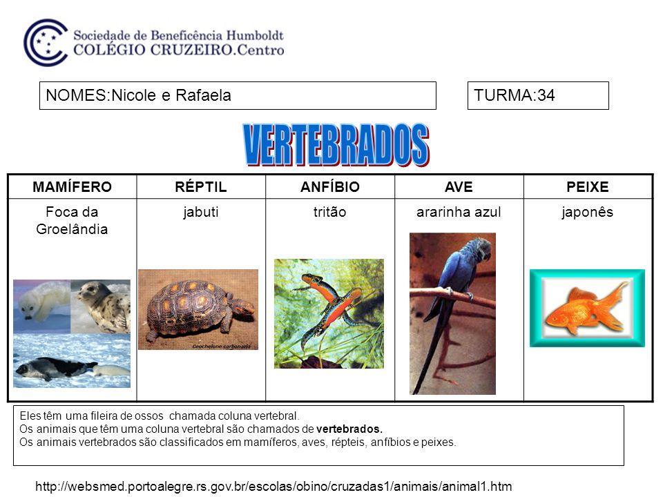 NOMES:Izabela e Manuella VelasquesTURMA:34 Chamamos de invertebrados, os animais que não possuem coluna vertebral, nem crânio.