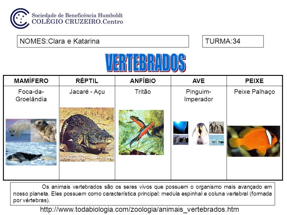 MAMÍFERORÉPTILANFÍBIOAVEPEIXE Foca-da- Groelândia Jacaré - AçuTritãoPinguim- Imperador Peixe Palhaço NOMES:Clara e KatarinaTURMA:34 Os animais vertebr