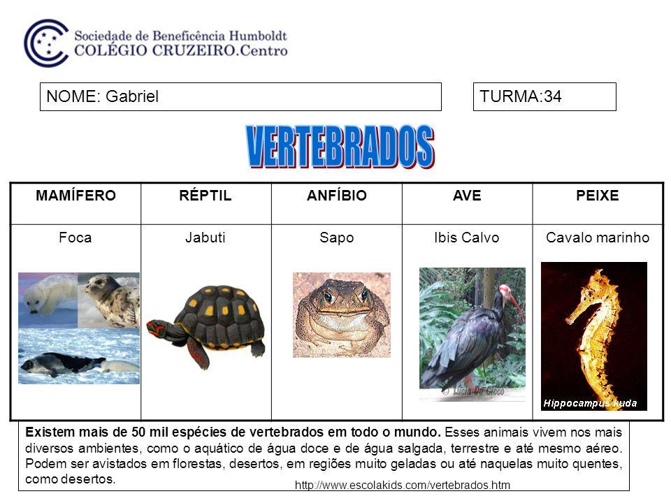 MAMÍFERORÉPTILANFÍBIOAVEPEIXE FocaJabutiSapoIbis CalvoCavalo marinho NOME: GabrielTURMA:34 Existem mais de 50 mil espécies de vertebrados em todo o mu