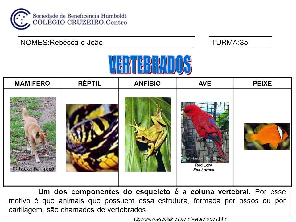 NOMES:Beatriz e ClaraTURMA:34 Invertebrados são animais que não possuem coluna vertebral.