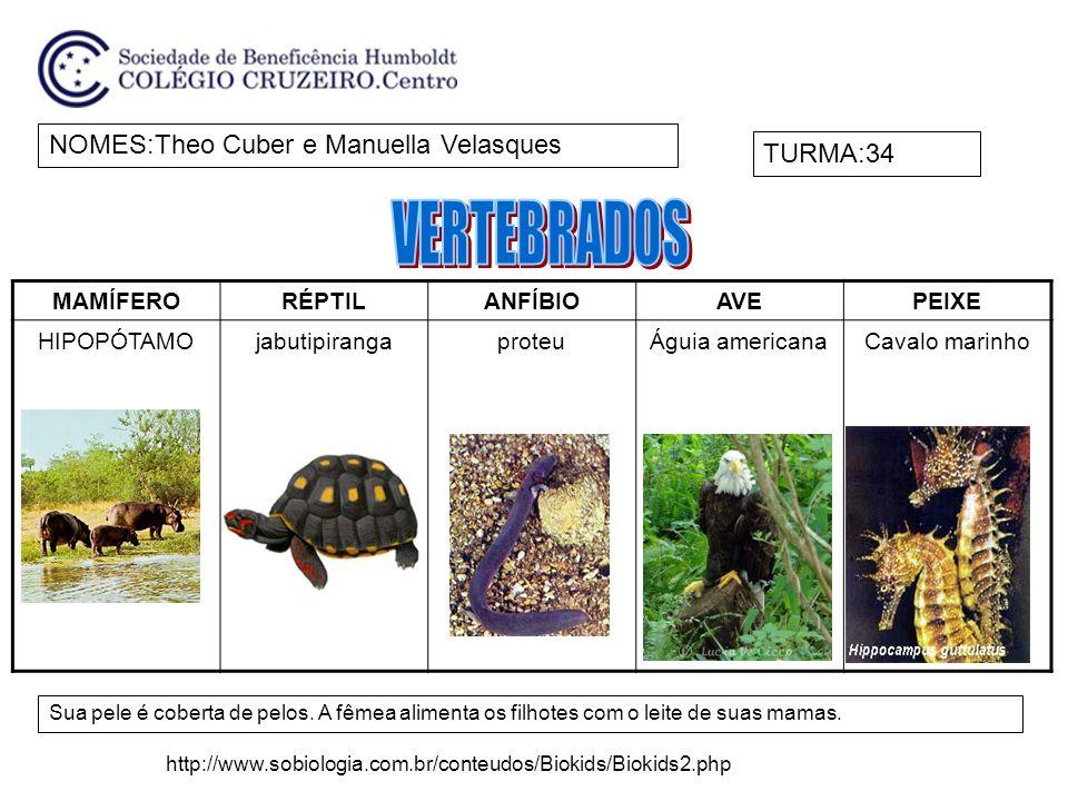 NOMES:GabriellaTURMA:34 Invertebrados: ausência de espinha dorsal.