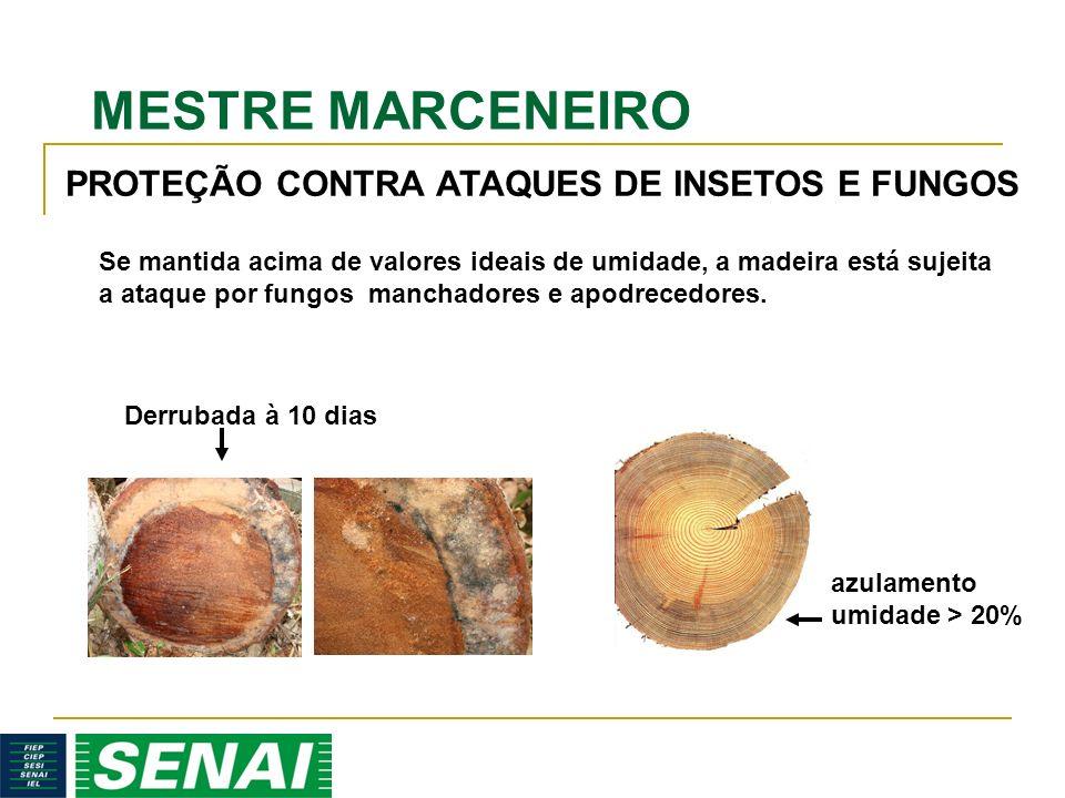 MESTRE MARCENEIRO Se mantida acima de valores ideais de umidade, a madeira está sujeita a ataque por fungos manchadores e apodrecedores. PROTEÇÃO CONT