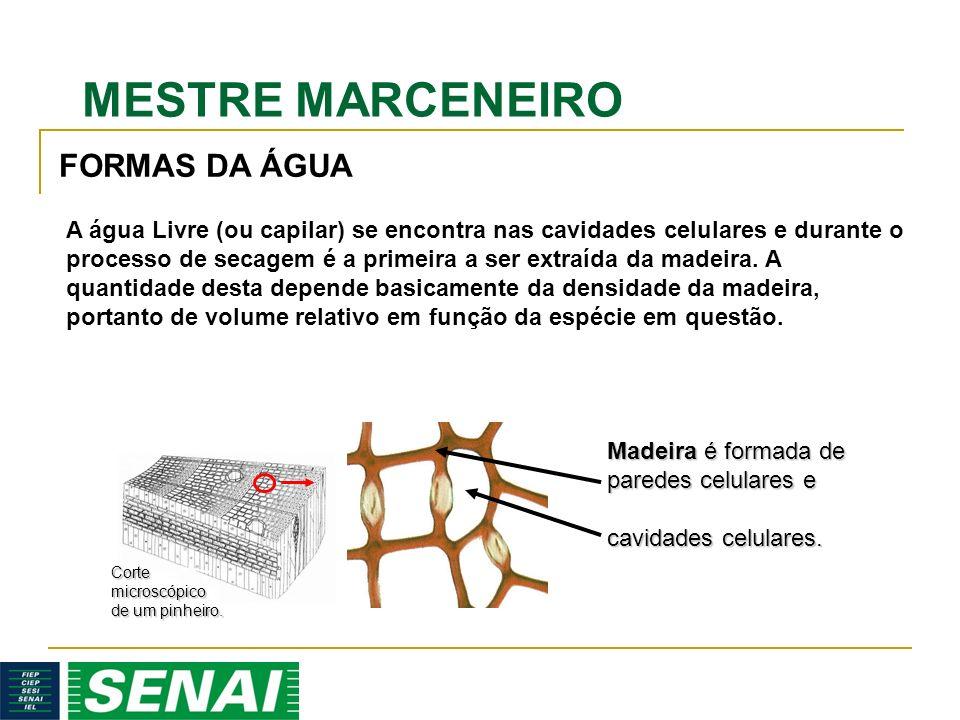 MESTRE MARCENEIRO Madeira é formada de paredes celulares e cavidades celulares. A água Livre (ou capilar) se encontra nas cavidades celulares e durant