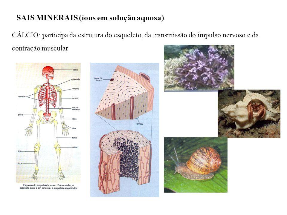 SAIS MINERAIS (íons em solução aquosa) CÁLCIO: participa da estrutura do esqueleto, da transmissão do impulso nervoso e da contração muscular