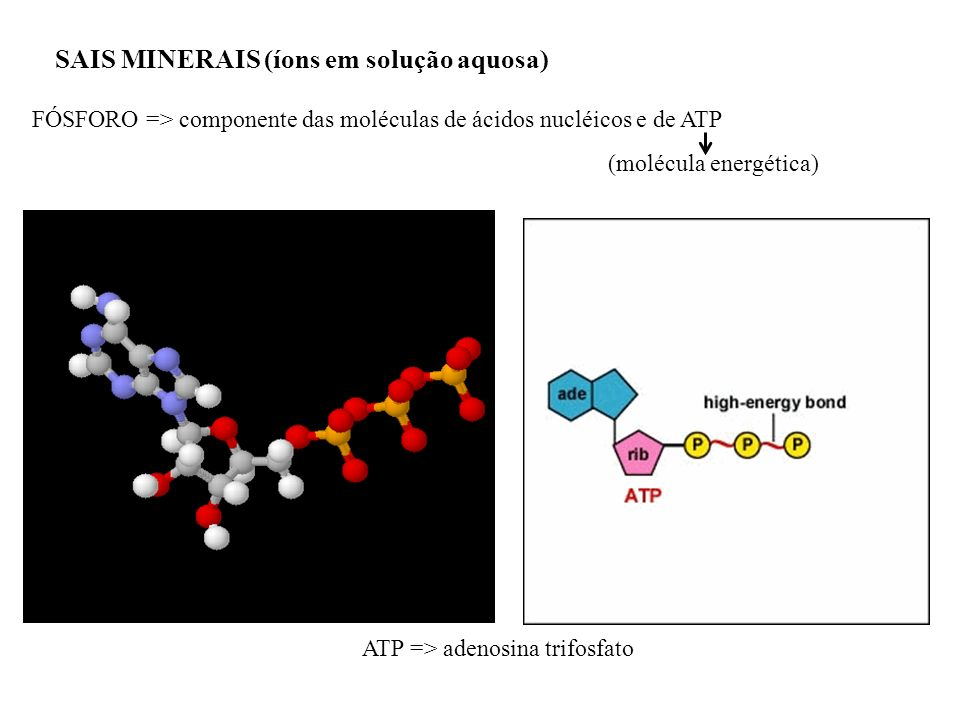 SAIS MINERAIS (íons em solução aquosa) FÓSFORO => componente das moléculas de ácidos nucléicos e de ATP (molécula energética) ATP => adenosina trifosf