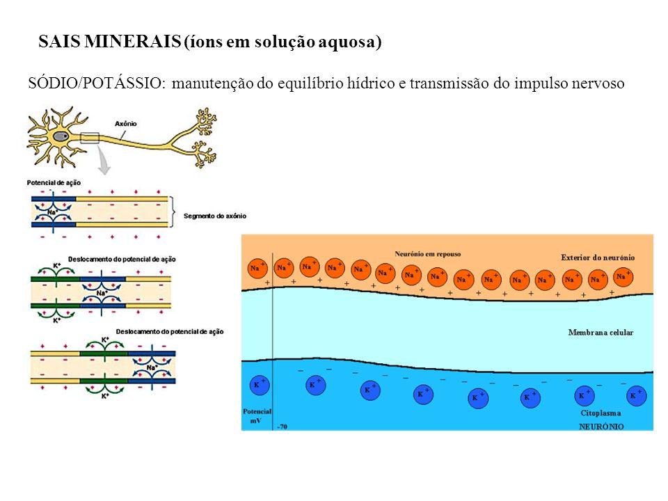 SAIS MINERAIS (íons em solução aquosa) SÓDIO/POTÁSSIO: manutenção do equilíbrio hídrico e transmissão do impulso nervoso