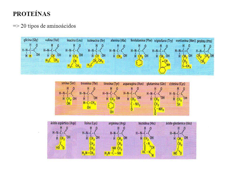 PROTEÍNAS => 20 tipos de aminoácidos