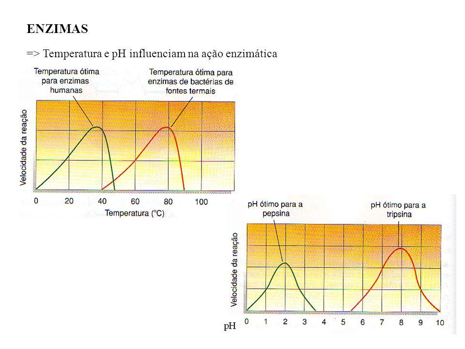 ENZIMAS => Temperatura e pH influenciam na ação enzimática