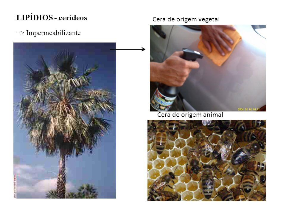 LIPÍDIOS - cerídeos => Impermeabilizante Cera de origem vegetal Cera de origem animal