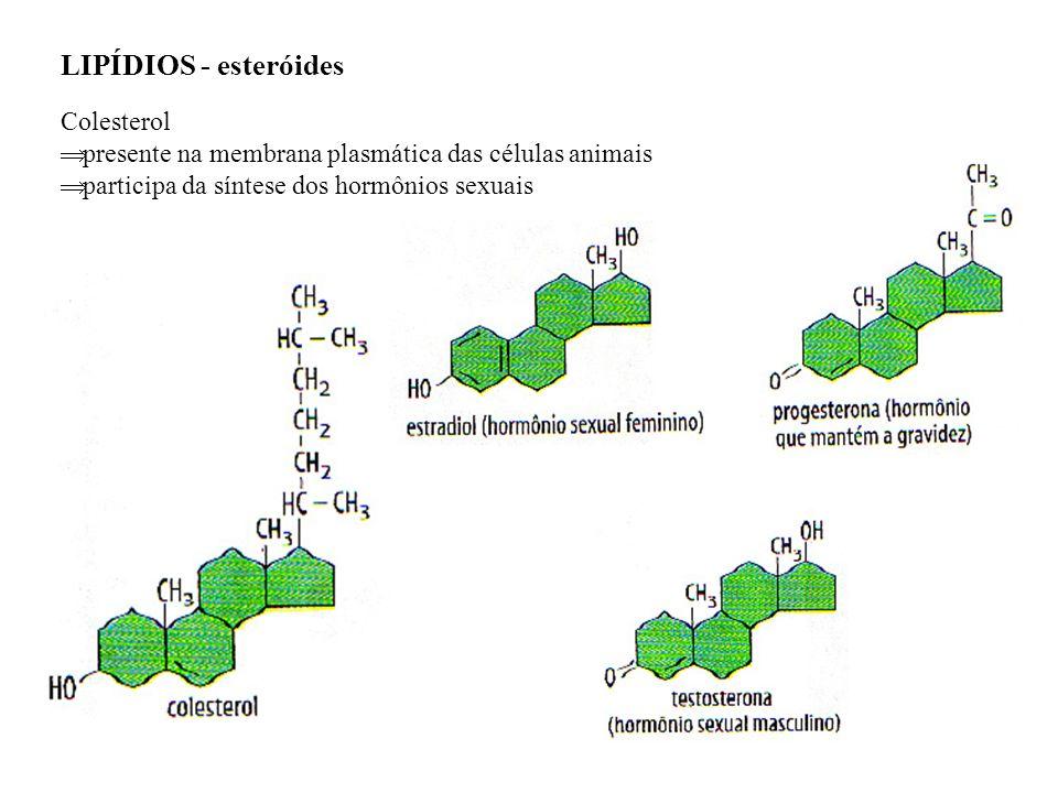 LIPÍDIOS - esteróides Colesterol presente na membrana plasmática das células animais participa da síntese dos hormônios sexuais