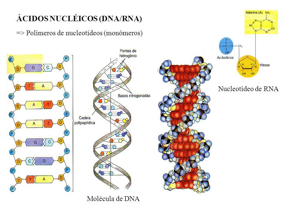 ÁCIDOS NUCLÉICOS (DNA/RNA) => Polímeros de nucleotídeos (monômeros) Nucleotídeo de RNA Molécula de DNA