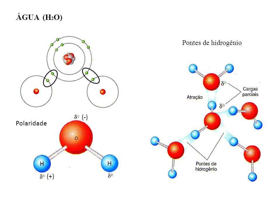 (-) (+) ÁGUA (H 2 O) Polaridade Pontes de hidrogênio