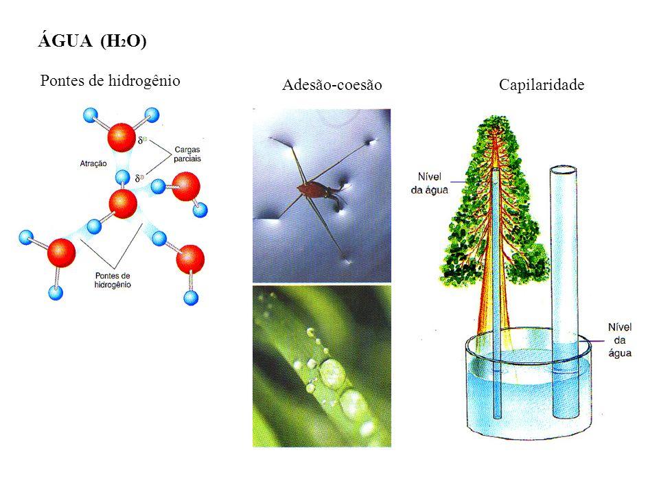 ÁGUA (H 2 O) Pontes de hidrogênio Adesão-coesãoCapilaridade