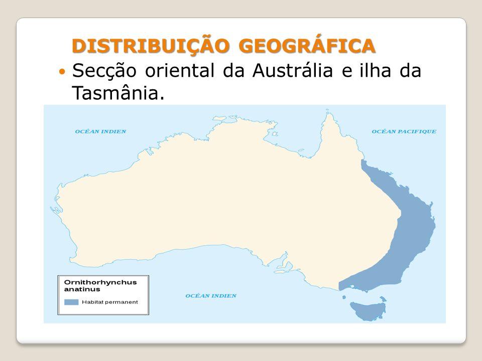 Informações Habitat natural: Rios e lagos de água doce, bem como túneis subterrâneos que escava no solo.