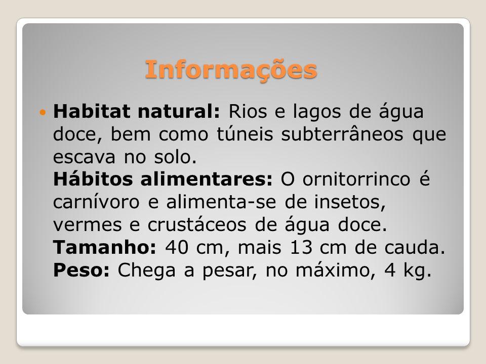 Período de gestação: O ornitorrinco é o único mamífero que põe ovos.