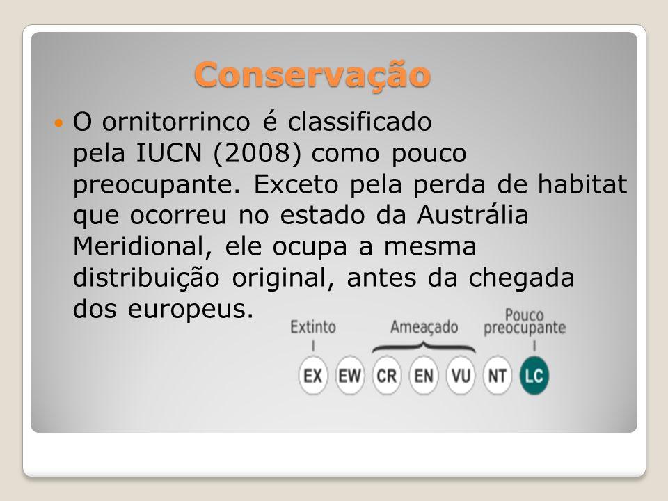 O ornitorrinco possui hábito crepuscular e/ou noturno.