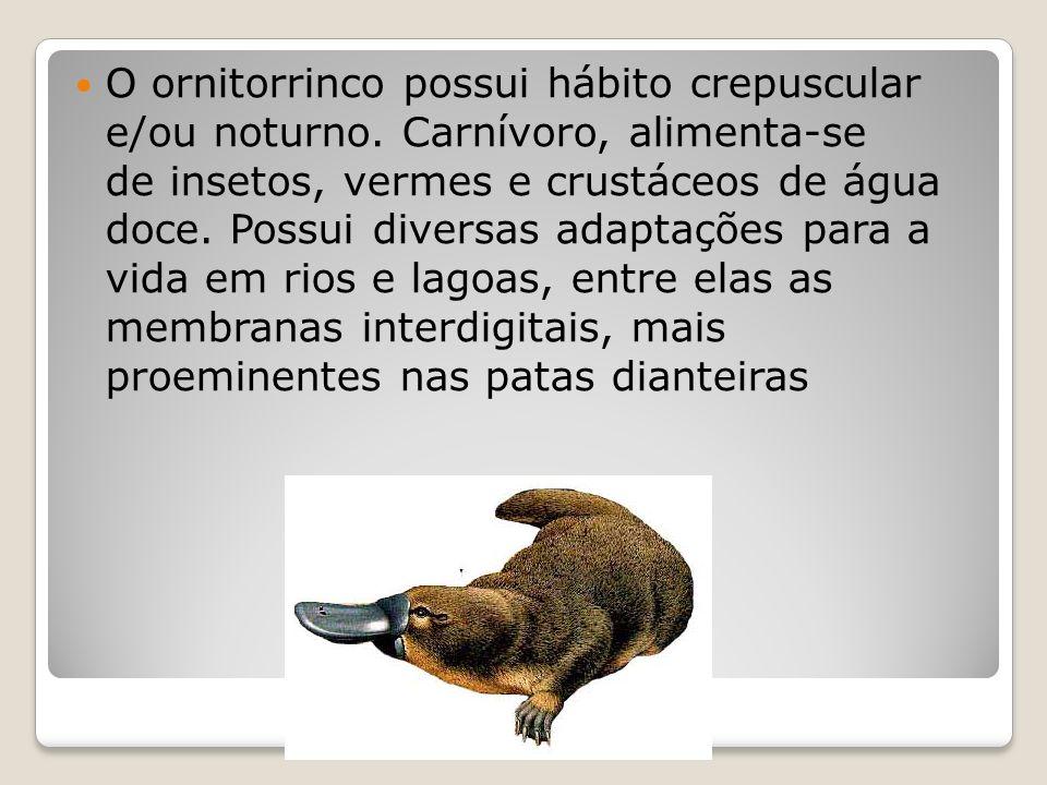 Curiosidades Apesar de parecer amigável, o ornitorrinco tem ferrões em suas patas e quando se sente ameaçado, pode atacar.