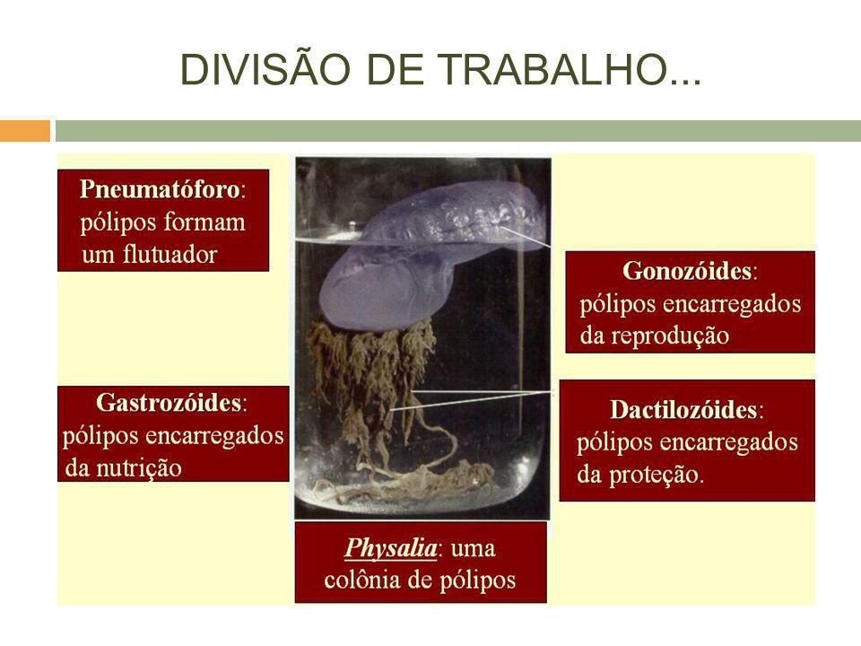 DIVISÃO DE TRABALHO...