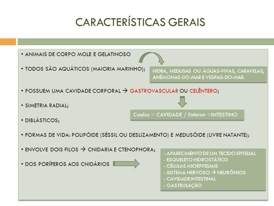 CARACTERÍSTICAS GERAIS ANIMAIS DE CORPO MOLE E GELATINOSO TODOS SÃO AQUÁTICOS (MAIORIA MARINHO); POSSUEM UMA CAVIDADE CORPORAL GASTROVASCULAR OU CELÊN