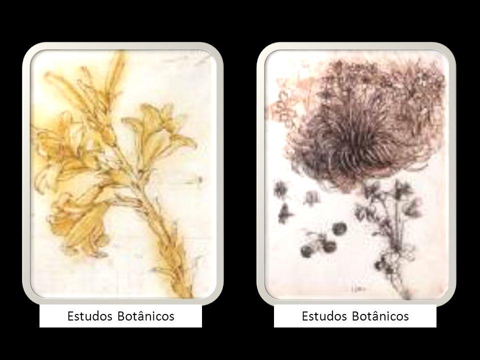 Estudos Botânicos