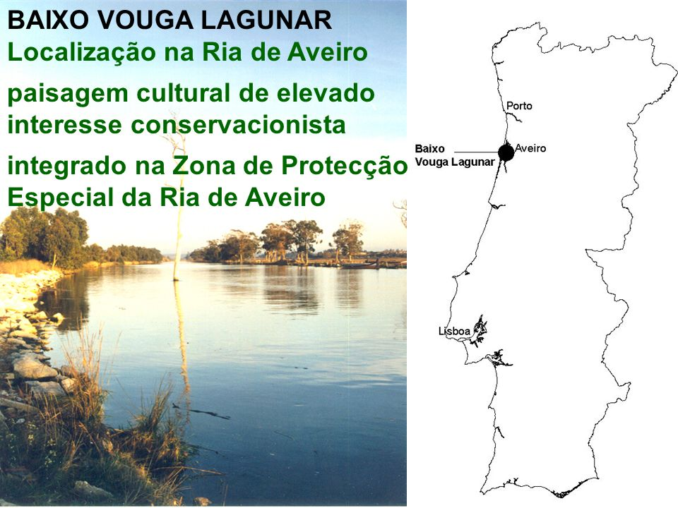 A água é um elemento marcante na génese e na dinâmica do Baixo Vouga Lagunar origem do solo inundações salinização rega transporte