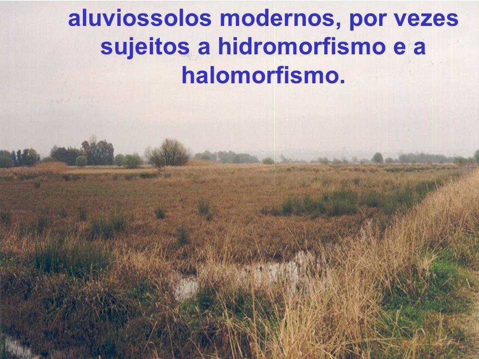 Conclusão importância dos Planos de gestão da água e do solo e de gestão da diversidade biológica e da paisagem na conservação do agroecossistema do Baixo Vouga Lagunar importância do empenhamento e apoio dos agentes intervenientes: entidades públicas com responsabilidade no BVL e na Ria de Aveiro, proprietários e utilizadores