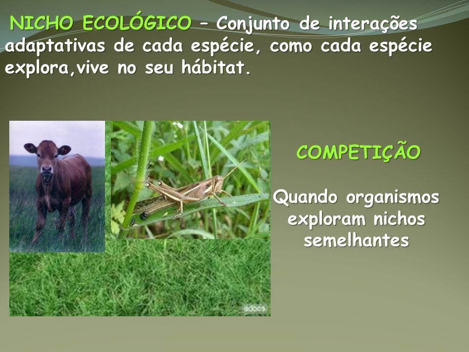 NICHO ECOLÓGICO – Conjunto de interações adaptativas de cada espécie, como cada espécie explora,vive no seu hábitat. NICHO ECOLÓGICO – Conjunto de int