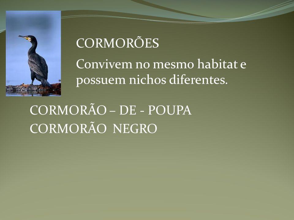 CORMORÕES CORMORÃO – DE - POUPA CORMORÃO NEGRO Convivem no mesmo habitat e possuem nichos diferentes.