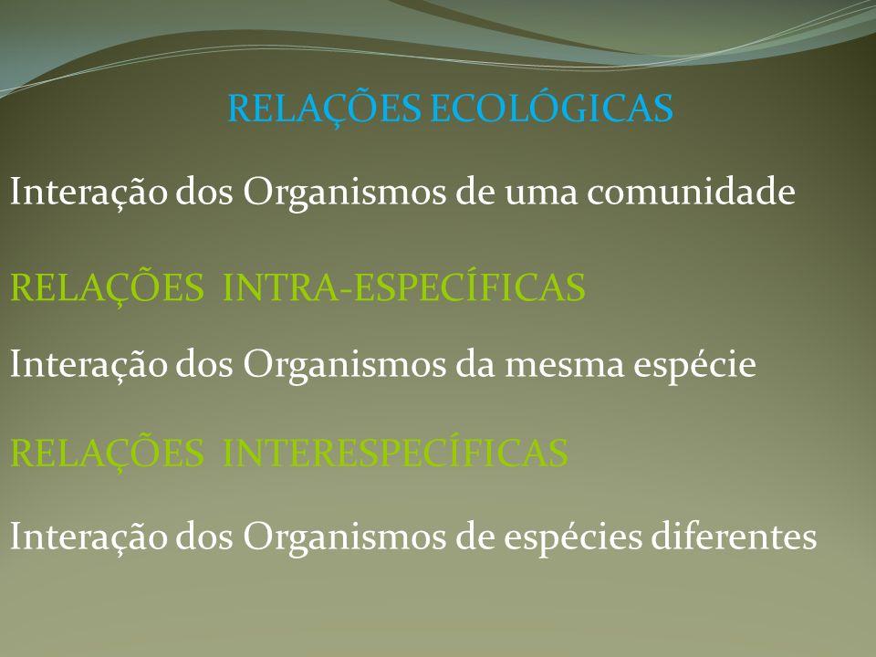 RELAÇÕES ECOLÓGICAS Interação dos Organismos de uma comunidade RELAÇÕES INTRA-ESPECÍFICAS Interação dos Organismos da mesma espécie RELAÇÕES INTERESPE
