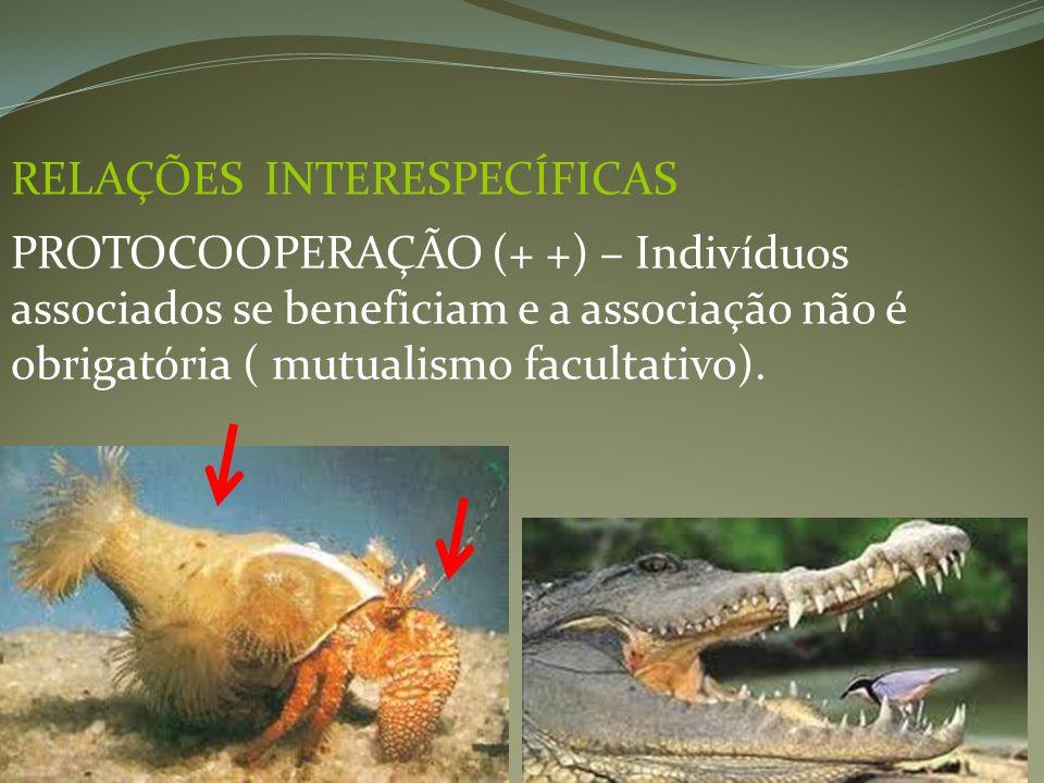 RELAÇÕES INTERESPECÍFICAS PROTOCOOPERAÇÃO (+ +) – Indivíduos associados se beneficiam e a associação não é obrigatória ( mutualismo facultativo).