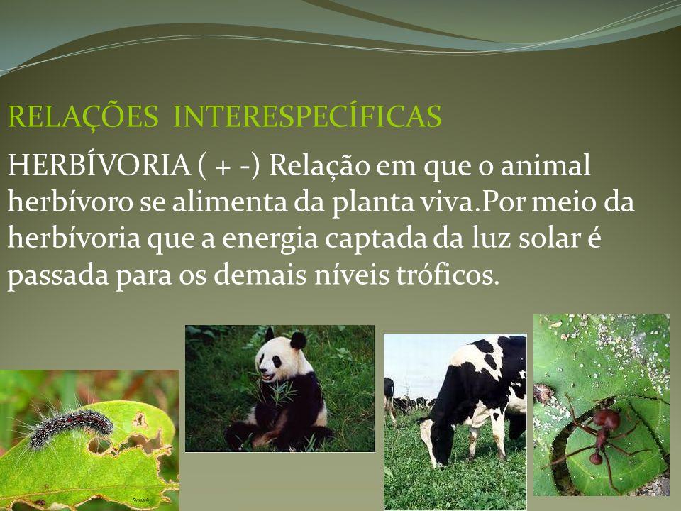 RELAÇÕES INTERESPECÍFICAS HERBÍVORIA ( + -) Relação em que o animal herbívoro se alimenta da planta viva.Por meio da herbívoria que a energia captada