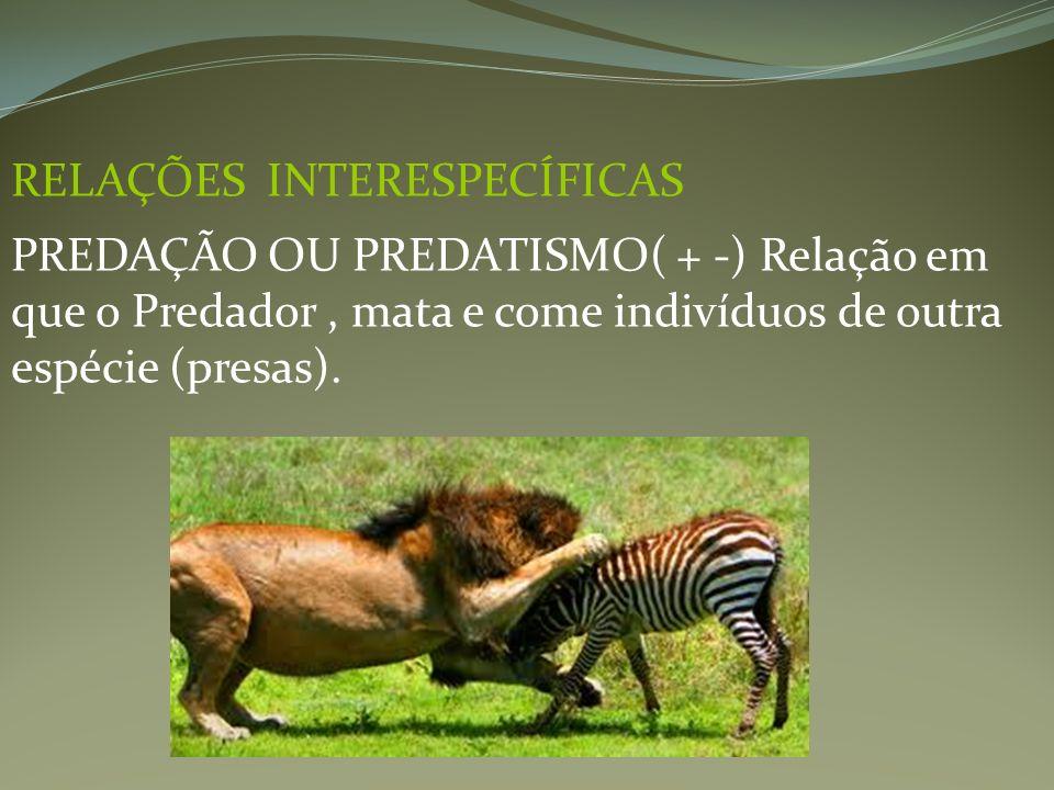 RELAÇÕES INTERESPECÍFICAS PREDAÇÃO OU PREDATISMO( + -) Relação em que o Predador, mata e come indivíduos de outra espécie (presas).