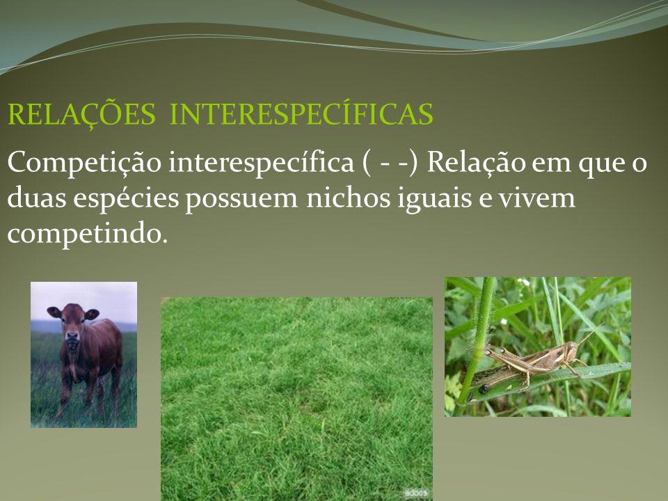 RELAÇÕES INTERESPECÍFICAS Competição interespecífica ( - -) Relação em que o duas espécies possuem nichos iguais e vivem competindo.