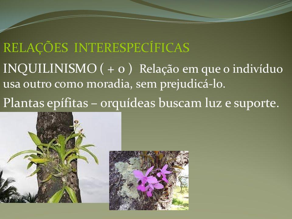 RELAÇÕES INTERESPECÍFICAS INQUILINISMO ( + 0 ) Relação em que o indivíduo usa outro como moradia, sem prejudicá-lo. Plantas epífitas – orquídeas busca