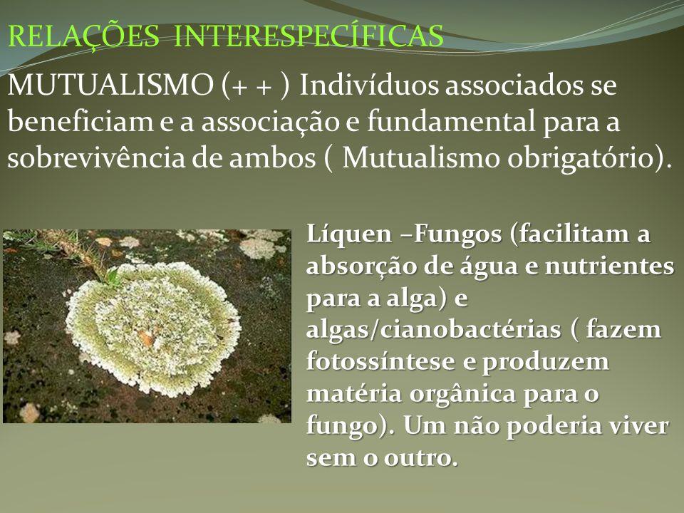 RELAÇÕES INTERESPECÍFICAS MUTUALISMO (+ + ) Indivíduos associados se beneficiam e a associação e fundamental para a sobrevivência de ambos ( Mutualism