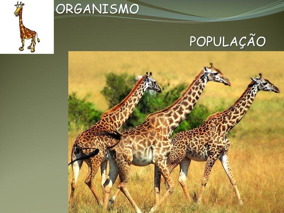 RELAÇÕES ECOLÓGICAS Interação dos Organismos de uma comunidade RELAÇÕES INTRA-ESPECÍFICAS Interação dos Organismos da mesma espécie RELAÇÕES INTERESPECÍFICAS Interação dos Organismos de espécies diferentes