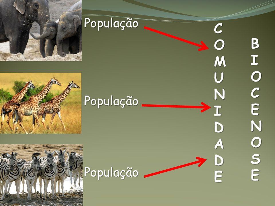 População População População COMUNIDADE BIOCENOSE
