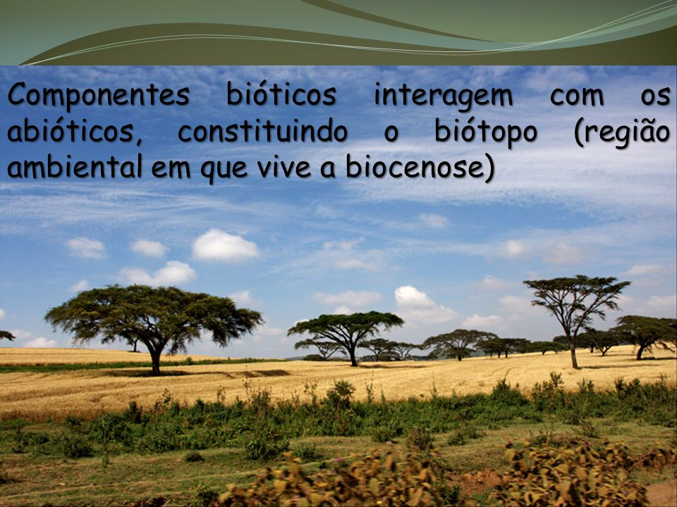 Biótopo + Biocenose = Ecossistema