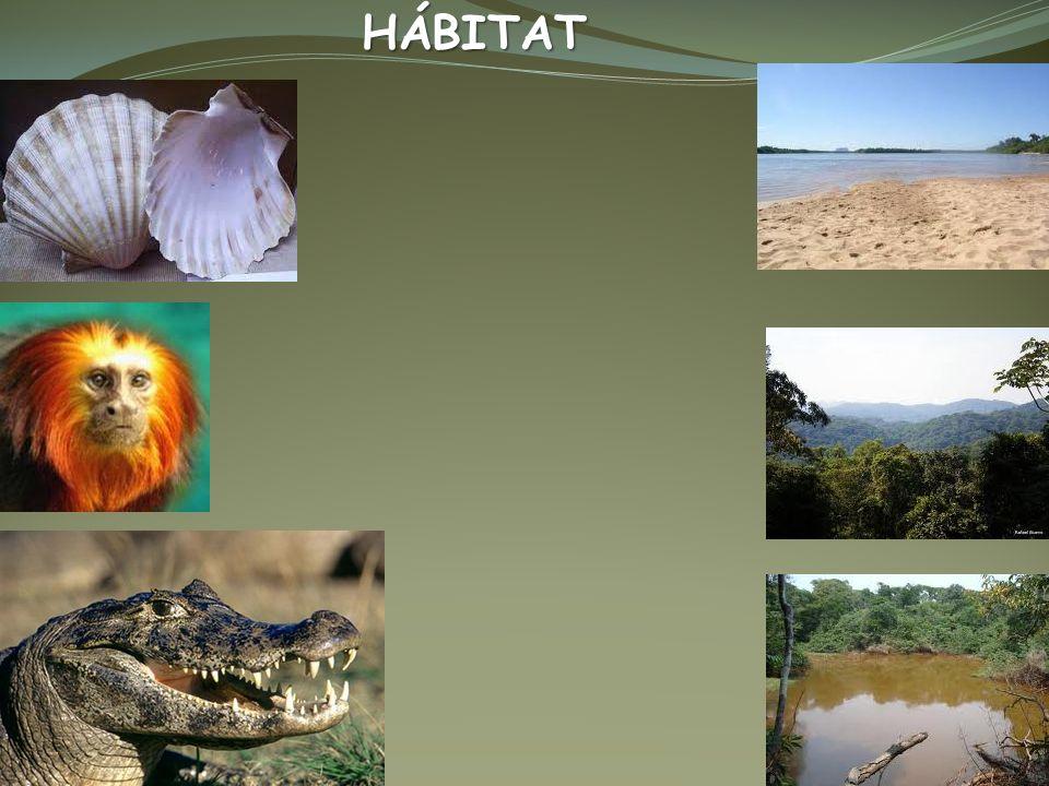 NICHO ECOLÓGICO – Conjunto de interações adaptativas de cada espécie NICHO ECOLÓGICO – Conjunto de interações adaptativas de cada espécie Hábitat – Terrestre Úmido Vegetação próxima a rios,lagos, lugares úmidos.