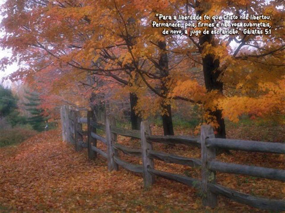 Oremos Nós Te bendizemos, Deus nosso Pai, porque habitas verdadeiramente no meio de nós.